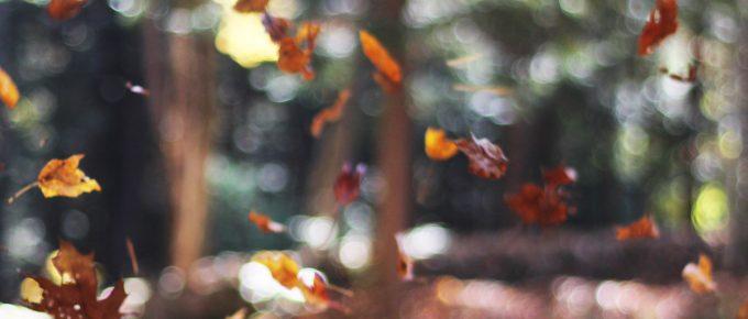 autumn scene photographed bymott rodeheaver unsplash