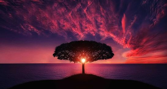 Tree by water in the sunrise; image by pixabay