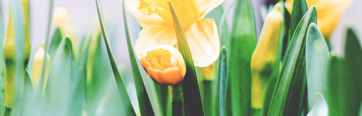 2019 Easter Sermon Series