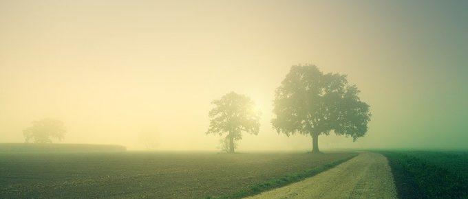 Picture of sun rising in fog, from pixabay