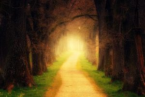 Forest path image from Pixabay