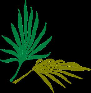 palm-leaves-pixabay