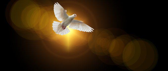 dove, by Gerd Altmann, Pixabay
